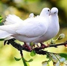 Doves at your wedding ceremony